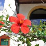 Photo of Hotel Marina Village