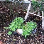 Baladerry Inn - Whimsical Plants