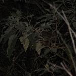 Possum we found during night canoeing