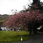Brander Lodge & the blossom tree