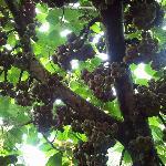 Unbelievable figs!