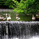 Old Mill Duck Pond
