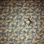 Bugs on floor