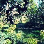 Inn Paradiso Grounds