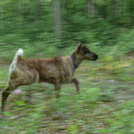 Running Reindeer Baby