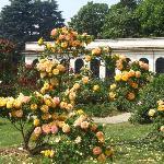 Monza: roseto Fumagalli