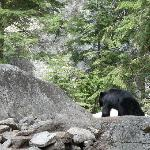 The bear that was on the trail.
