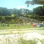 My daughters wedding at Alnwick gardens