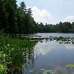 View of pond at Half Moon
