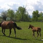 moma & foal