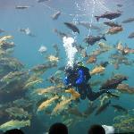 Feeding time at the Aquarium