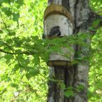 Bird House outside B&B room