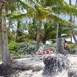 beach emerald palms, s. andros island, bahamas1