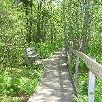 walkway thru marsh area