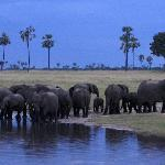 Elephants at pan at dusk-oncoming thunderstorm.