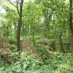 Wonderful walks in the wooded hillside