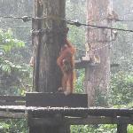 The First Orangutan View