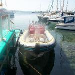 Tiger boat at Pafos harbour