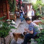 Common area.  Our friend petting Milk Tea