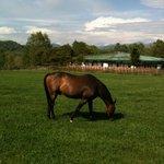 Nishikioka Horse Farm
