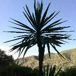 Un palmier