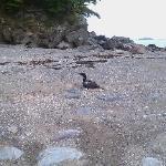 Loon on the beach that we rescued while there