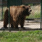 Rocky Mountain Wildlife Park