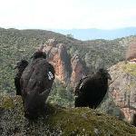 California Condors/Pinnacles National Monument