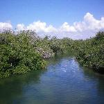 Beautiful Mangrove Lagoon