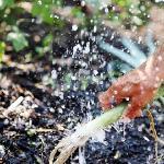 Leek with splashing water