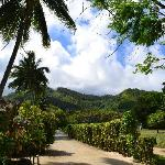Gardens and view back towards centre of island from Muri Beachcomber main entrance