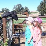 kids loved this petting zoo