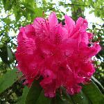 flowers in Stanley Park
