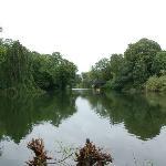 Ørstedsparkenの池を眺める