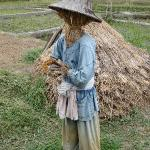 Scarecrow from the pedi fields