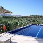 Pool with a view surrounded by olive trees