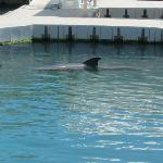 Dophin exhibit and show