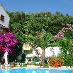 pool,flora & fauna