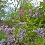 More of the Perennial Garden