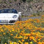 Nur für Hausgäste das Porsche Boxster Cabrio