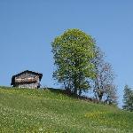 Diese Linde am Dorfeingang ist nicht der einzige prachtvolle Baum!