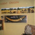 Roseburg museum - fossil exhibit