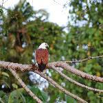 ...but also beautiful birds...