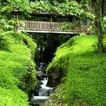 Rios Tropicales Lodge - Covered Bridge