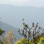 view from Mandarin resort