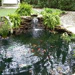 Davy House Koi Pond