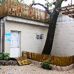 Courtyard with 100-year-old magnolia tree of Laoximen Hostel