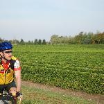 à vélo sur la route des vins,