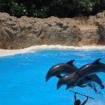 Dolphin show at Loro Park