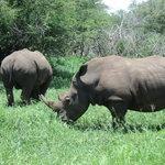 Mr Rhino